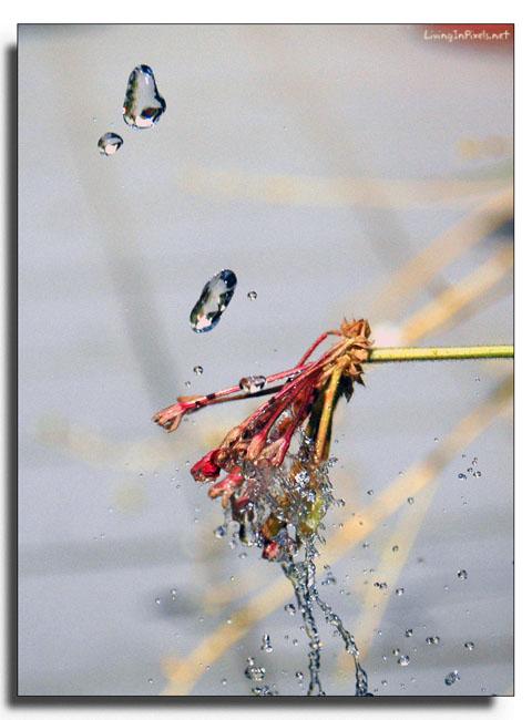 2005-07-11-041-gotas-i-flor