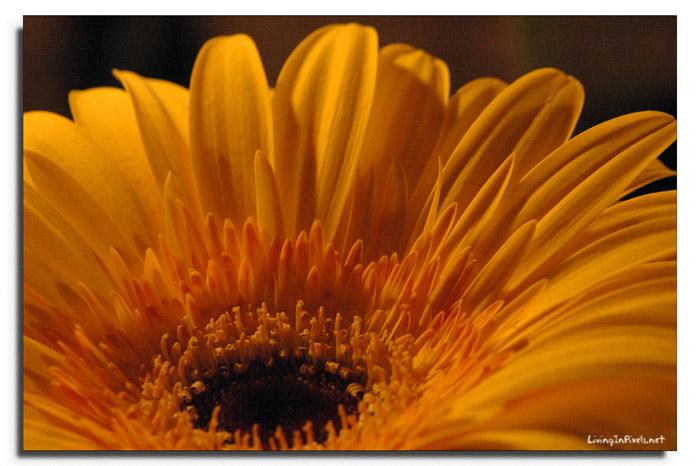 2007-05-15-180021_flor_taronja