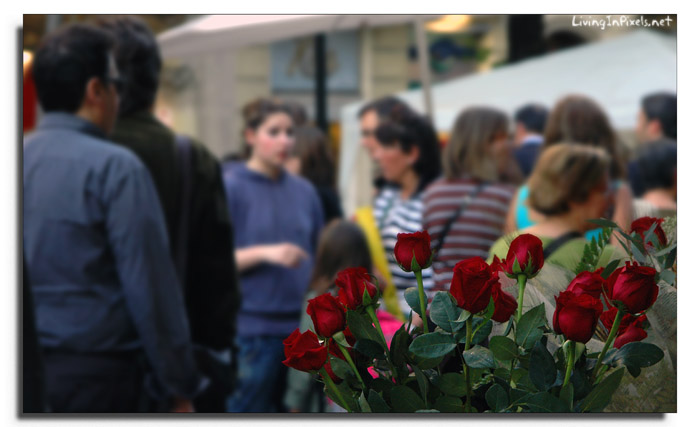 2009-04-23-18_10_18_roses_bullici