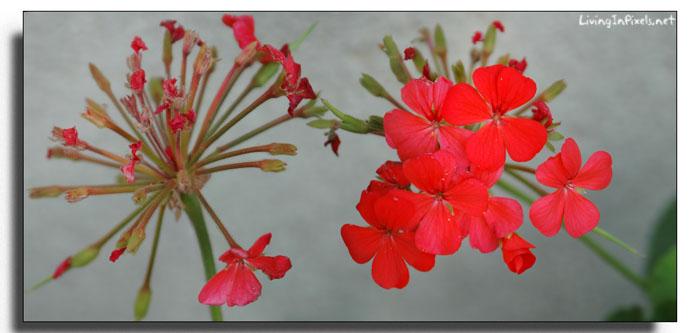 panorámica flores